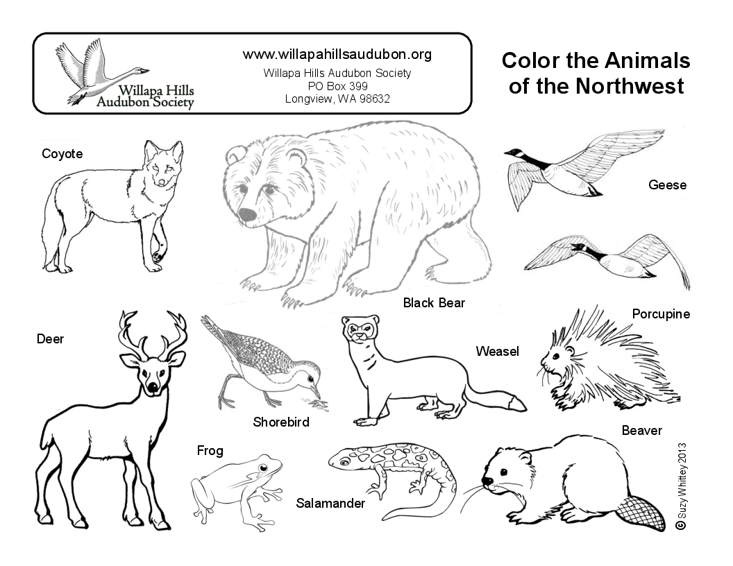 Color animals of the NW
